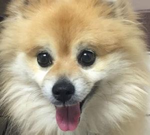 dog after dog cataract surgery
