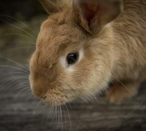 understanding vision in animals