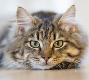 understanding vision in cats