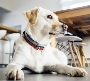 understanding vision in dogs