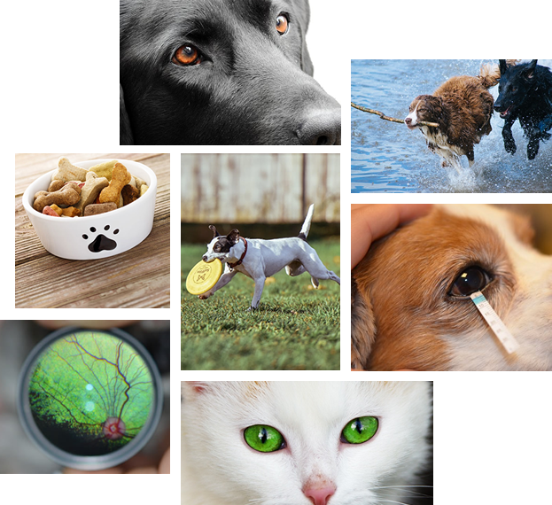 what-to-expect-collage-animal-eye-clinic – Animal Eye Clinic