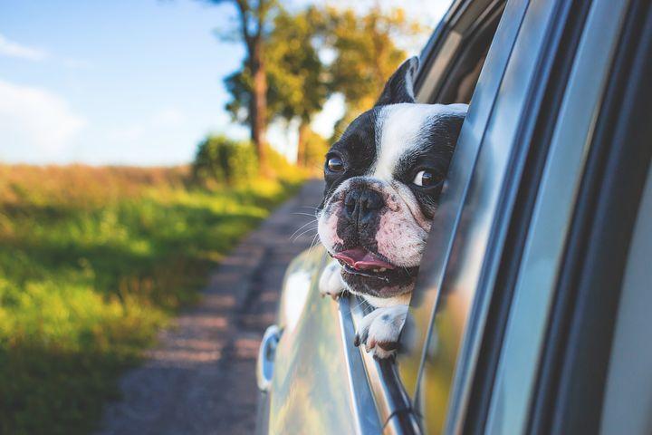animal eye clinic carmel, in catarats in dogs