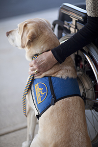 Annual Service Dog Event at Animal Eye Clinic in Carmel, IN
