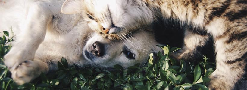 animal-eye-clinic-corneal-ulcers-dogs-cats
