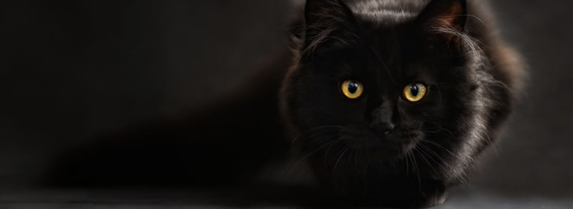 animal-eye-clinic-eye-problems-in-cats-2