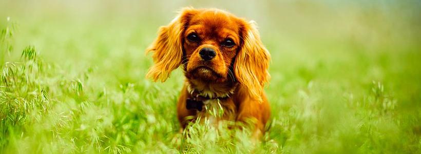 animal-eye-clinic-pet-vision