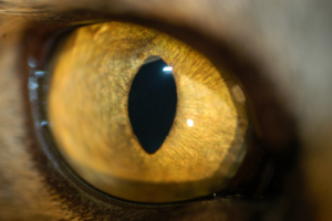photograph of a normal cat eye