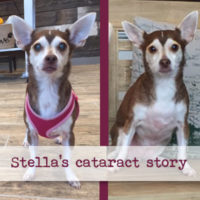 Stella's Cataract Surgery